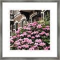 Hydrangeas In Holland Framed Print by Carol Groenen