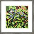 Ladybirds Framed Print by Andrew Macara