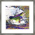 Largemouth Bass P68 Framed Print by Wingsdomain Art and Photography