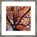 Looking Up Framed Print by Barbara Shallue