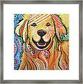 Max ... Abstract Dog Art...golden Retriever Framed Print by Amy Giacomelli