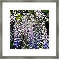 Nancys Wisteria 3 Db Framed Print by Rich Franco