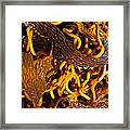 Noodles Of The Sea Framed Print by Gwyn Newcombe