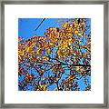 Old Rag Hiking Trail - 121218 Framed Print by DC Photographer