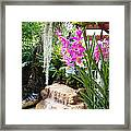 Orchid Garden Framed Print by Carey Chen
