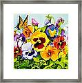 Pansies With Butterfly Framed Print by Janis Grau