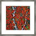 Paper White Birch Reflections Framed Print by Janine Riley