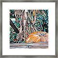 Pumpkin Framed Print by Anthony Mezza