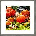 Pumpkin Harvest Framed Print by Karen Wiles
