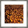 Pumpkins Framed Print by Ron Sanford