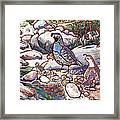 Quail Family Framed Print by Nadi Spencer