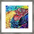 Rainbow Macaw Framed Print by Maria Arango
