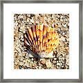 Seashell On Sandy Beach Framed Print by Carol Groenen