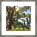 Southern Comfort Painted Framed Print by Steve Harrington
