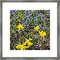 Spring Wildflowers Framed Print by Elena Elisseeva