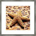 Starfish Enterprise Framed Print by Andee Design