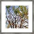 Sun Dappled Framed Print by Dale   Ford
