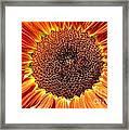 Sunflower Burst Framed Print by Kerri Mortenson