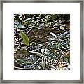 Sunlit Mountain Laurel Framed Print by JW Hanley