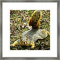 Surprise Mister Squirrel Framed Print by Shawna Rowe