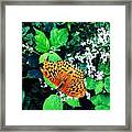 The Forest Guardian 2 Framed Print by Lucy D