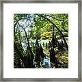 The Swamp By The Springs Framed Print by Julie Dant