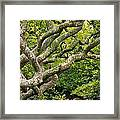 Tree #1 Framed Print by Stuart Litoff