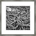 Tree Remains Framed Print by Charline Xia