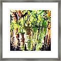 Trees Framed Print by Daniel Janda