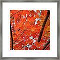 Under The Orange Maple Tree Framed Print by Rona Black