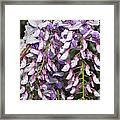 Weeping Wisteria - Spring Snow - Ice - Lavender - Flora Framed Print by Andee Design