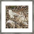 White-tailed Deer Hair Framed Print by Linda Freshwaters Arndt