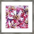 Wild Rose Framed Print by Zaira Dzhaubaeva