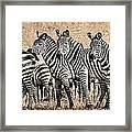 Zebra Herd Rock Texture Blend Framed Print by Mike Gaudaur
