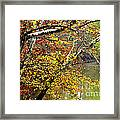 Fall Along West Fork River Framed Print by Thomas R Fletcher
