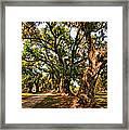 A Southern Stroll Framed Print by Steve Harrington