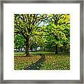 A Walk In The Park Framed Print by Dan Mihai