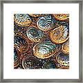 Abalones Framed Print by Judi Bagwell