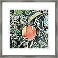 Apple Tree Sketchbook Project Down My Street Framed Print by Irina Sztukowski