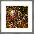 Autumn Sunburst Framed Print by Carolyn Marshall