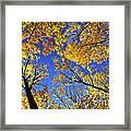Autumn Treetops Framed Print by Elena Elisseeva