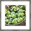 Basket Of Brussels Sprouts Framed Print by Elena Elisseeva