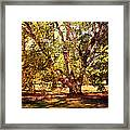 Birch Tree Framed Print by Jai Johnson