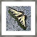 Butterfly In Rain Framed Print by Susan Leggett