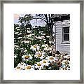 Daises Delight II Framed Print by Doug Kreuger