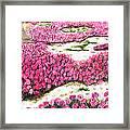 Desert Flowers Framed Print by Glenda Zuckerman