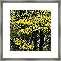 Dun Na Ri Forest Park, County Cavan Framed Print by Peter McCabe