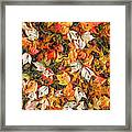 Fall Autumn Leaves On Water Framed Print by Randy Steele