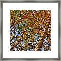 Fall Canopy Framed Print by Barry Jones