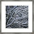 Fresh Snowfall Blankets Tree Branches Framed Print by Tim Laman